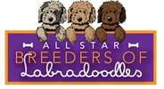 ALL STAR BREEDERS OF LABRADOODLES